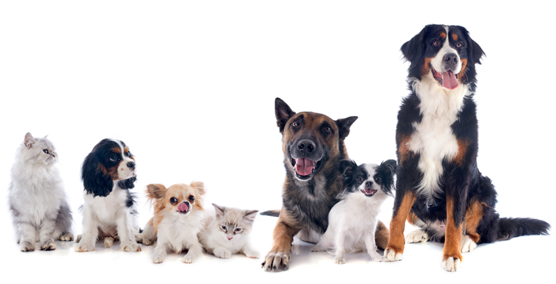 sup_enzim_perros_gatos